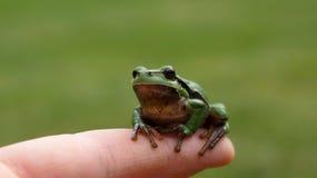Frosch auf Finger Lizenzfreie Stockfotografie
