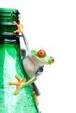 Frosch auf Flasche getrenntem Weiß Stockfotos