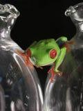 Frosch auf Glas Stockbild