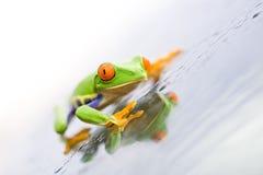 Frosch auf Glas Lizenzfreie Stockbilder