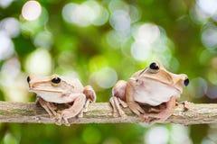 Frosch auf grünem bokeh Hintergrund Stockbilder