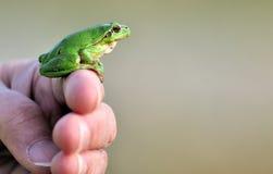 Frosch auf menschlichen Fingern Stockfotografie