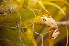 Frosch auf Orchideen lizenzfreie stockfotos