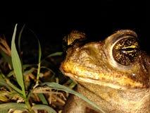 Frosch auf Ruhe Lizenzfreies Stockfoto