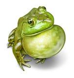 Frosch aufgeblähte Kehle stock abbildung