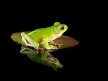 Frosch, der auf Blatt sitzt Stockfotos