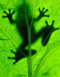 Frosch, der auf einem Blatt stillsteht Stockfotos