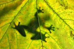 Frosch, der auf einem Blatt stillsteht Stockfotografie