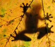Frosch, der auf einem Blatt stillsteht Lizenzfreie Stockfotografie