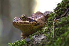 Frosch, der auf einem Brunnen sitzt Lizenzfreies Stockfoto