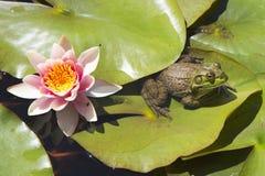 Frosch, der auf einem Lotosblatt stillsteht Lizenzfreie Stockfotografie
