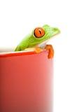 Frosch, der aus dem Kochen von PO heraus schaut Stockbild