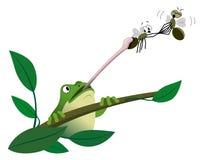 Frosch, der eine Fliege abfängt lizenzfreie abbildung