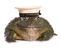 Frosch, der einen Unterseeboothut MAJESTÄT trägt Stockfoto