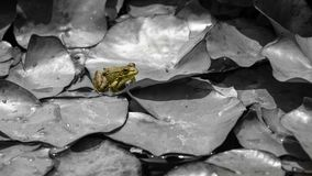 Frosch in der Farbe lizenzfreies stockbild