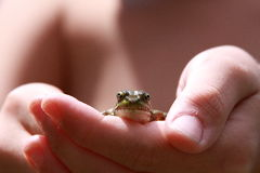 Frosch in der Hand stockfoto