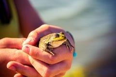 Frosch in der Hand lizenzfreie stockbilder