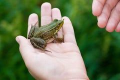Frosch in der Hand. Stockbilder