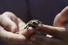 Frosch in der Hand Lizenzfreie Stockfotos
