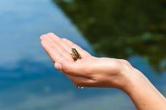 Frosch in der Hand Stockfotografie