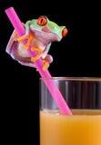 Frosch, der Lippen über OJ leckt Lizenzfreie Stockfotos
