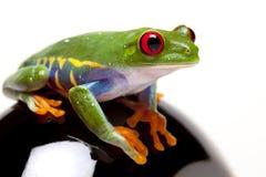 Frosch, der Sie sucht Stockbild