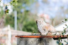 Frosch in der Sonne stockfoto