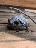 Frosch, der von der Sonne sich versteckt lizenzfreies stockfoto