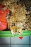 Frosch in einem Netz lizenzfreies stockbild