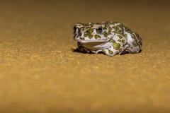 Frosch entspannt Stockfotos