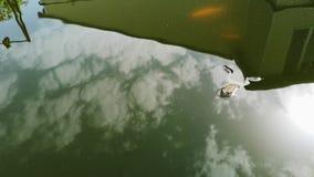Frosch fiel in das Pool und kann nicht hinausgehen Sie schwimmt und wird alt hinauszugehen, aber manchmal die Reste und erfasst S stock footage