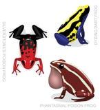 Frosch-Gift-Pfeil-Frosch-Frosch-gesetzte Karikatur-Vektor-Illustration 3 vektor abbildung