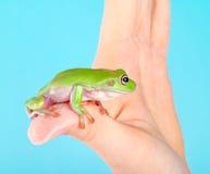 Frosch an Hand Lizenzfreie Stockbilder