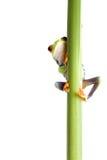 Frosch hinter Anlage getrenntem whi Stockfoto