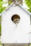Frosch im Birdhouse. Stockfotografie