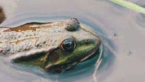 Frosch im Fluss stock video footage