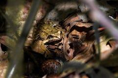 Frosch im Wald stockbild
