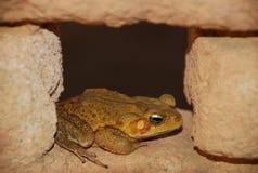 Frosch innerhalb des Landhauses stockbild