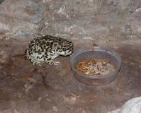 Frosch isst Wurm lizenzfreie stockfotos