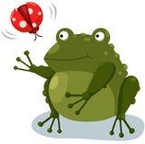 Frosch mit Marienkäfer Lizenzfreie Stockbilder