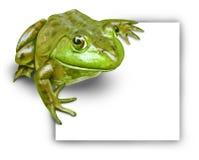 Frosch mit unbelegtem Zeichen vektor abbildung