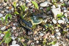 Frosch sitzt auf dem Steinboden Stockfotos