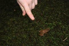 Frosch und eine Hand stockbild