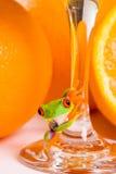 Frosch und Orangensaft Stockbild