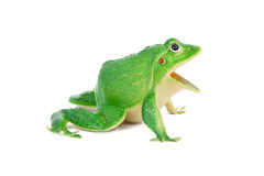 Froschspielzeug lizenzfreies stockfoto