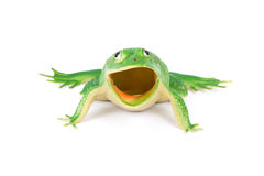 Froschspielzeug stockfotos