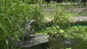 Froschstatue, die einen Strom des Wassers in einen Teich spuckt Langsame Bewegung stock video