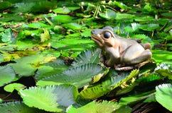 Froschstatue und Frosch Lizenzfreies Stockbild