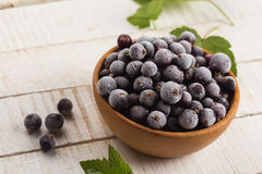 Frosen blackberries in bowl Stock Photography