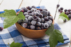 Frosen blackberries in bowl Stock Image